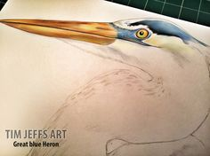 Progress pic #1 of a Great Blue Heron. Drawn with Tombow Irojiten Colored pencils