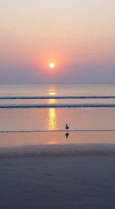 Seagull Daytona Beach Florida Shore Ocean Sunrise