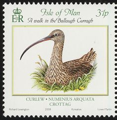 Eurasian Curlew stamps - mainly images - gallery format