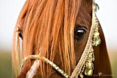 Me encanta los caballos