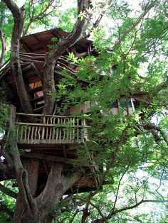 tree houses to live in | Living in a Treehouse | theAbysmal