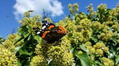 mariposa, plantas, flores, alas, colorida, cielo, nubes, 1706011530