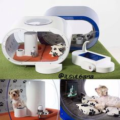 Beloved by many people, there are tons of dog products you can find on market. Dog house, as one of the most important product, get attentions from many Contemporary Skylights, Dog Mansion, Cool Dog Houses, Lattice Fence, Pet Furniture, Cozy Corner, Medium Dogs, Best Dogs, Baby Car Seats