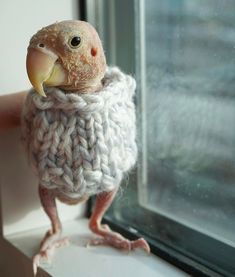 f9711d43a497a8 People Around the World are Making Sweaters for This Sick Lovebird. Puffins  BirdUnusual AnimalsLittle ...