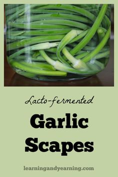 Fermenting scapes preserves them for later use, and adds probiotics to your diet. The fermented garlic scapes may used in any way that you use them raw. Fermenting Jars, Fermentation Recipes, Real Food Recipes, Vegan Recipes, Yummy Recipes, Best Probiotic, Probiotic Foods, Real Food Cafe, How To Make Pesto