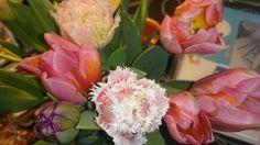 Tulipaner i lange baner Banner, Rose, Flowers, Plants, Banner Stands, Pink, Plant, Roses, Royal Icing Flowers