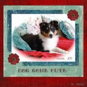 Cassie puppy page at MiDesign@michaels.com