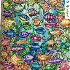 Instagram media desenhoscolorir - Esses peixes estão um arraso! By @juliasnf…