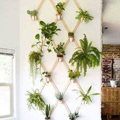 Brighten up your home with these indoor garden ideas.