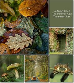 Autumn killed the summer with the softest kiss.by Audrey T Autumn Cozy, Soft Autumn, Autumnal, Autumn Inspiration, Color Inspiration, Collages, Color Collage, Hello Autumn, Color Pallets