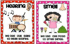 Krazee 4 Kindergarten: 5 Senses Poster Set- FREE DOWNLOAD