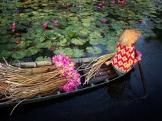 A woman harvests water lilies in the fertile Mekong Delta in Vietnam in this National Geographic Photo of the Day.