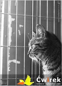 Burka piękna, młodziutka kotka wypatruje swój nowy domek