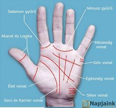 Palmistry is the art of describing or predicting the future through the interpretation of palm lines. There are four foremost lines in hand. They might have splits in them or they. Meaning Of Palm, Palm Lines Meaning, Basic Palm Reading, Palm Reading Charts, Mental Confusion, Hand Lines, Troubled Relationship, Deeper Life, Tarot Spreads