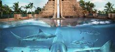 le fameu tunnel à requin