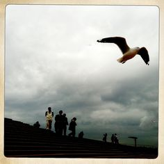 Can't avoid those seagulls anywhere in the world. I snapped this one on the steps of the Sydney Opera House. Taken with and Hipstamatic July 11, Gull, Opera House, Explore, World, Movies, Movie Posters, Animals, Animales