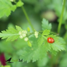 KräuterRabe, Pflanzenrätsel mit Gewinn