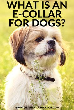 What Is an E Collar for Dogs? - How to Train Your Pooch Best Bark Collar, Anti Bark Collar, Bark Collars For Dogs, Dog Collars, Citronella Bark Collar, Very Small Dogs, Dog Shock Collar, Best Dog Training, Aggressive Dog