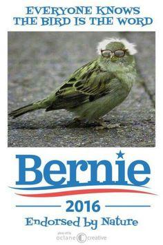 Endorsed by nature itself:  #BirdieSanders  #FeelTheBird   We win when you bring in new helpers! Visit Bernie's Volunteer Hub ~ http://BernieSanders.com/organize  Bernie's Volunteer Toolkit http://www.bernkit.com/  Bernie Sanders on Animal Welfare http://feelthebern.org/bernie-sanders-on-animal-welfare/   #NotMeUs