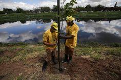 Projeto planta 170 árvores nativas no Pomar Urbano do Pinheiros