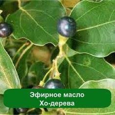 Эфирное масло Хо-дерева, 1 литр