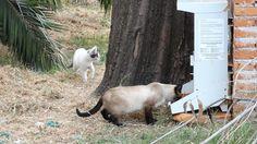 Inauguran Primer Comedog Exclusivo para Gatos en el DF