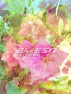 interior – VIMESO picture services