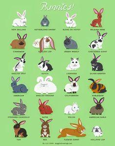 Bunnies!                                                                                                                                                                                 Más