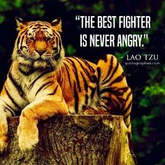 """The best fighter is never angry."" #laotzu #combat"