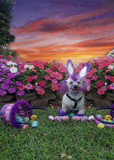 Easter dog?