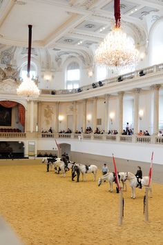 Riders perform on their Lipizzaner horses at Vienna's 430 year old Spanish Riding School - Vienna, Austria Horse Gear, Horse Tack, Spanish Riding School Vienna, Places To See, Places Ive Been, Heart Of Europe, Dream City, Vienna Austria, Horse Love
