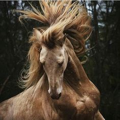 Wow, good horse hair day!