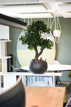 Grünpflanzen | Silk&Fine Kunstpflanzen lassen sich überall dort einsetzen wo auch echte Pflanzen Verwendung finden. Ob als Blickfang und Einzelstück mit passendem Gefäss, als Raumtrennung für Büros oder Restaurants oder für repräsentative Eingangsbereiche: Wir durften bereits Konferenzräume, Beautystudios, Praxisräume, Schaufensterdekorationen und auch einen Sichtschtz für Wellnessbereiche mit unseren Grünpflanzen ausstatten. #zimmerpflanzen Jaco, Restaurants, Planter Pots, Faux Plants, Conference Room, Indoor House Plants, Decorating, Restaurant, Plant Pots