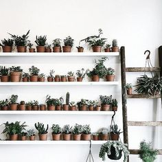Plants-piration
