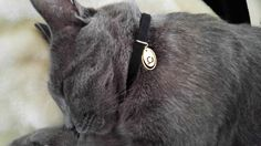 personalized Cat collar leather cat collar cat id tag pet id tag unique cat collar custom cat tag cat name tag kitten collar fancy cat by OlaJewelryDesign on Etsy