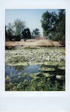 Great Photos, Cool Pictures, Film Photography, Nature Photography, The Last Summer, Small Canvas Paintings, Vintage Polaroid, Polaroid Pictures, Film Aesthetic