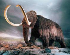 Rusia y Corea del Sur firman acuerdo para clonar al mamut