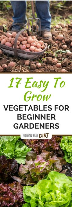 There is something thoroughly satisfying about easy to grow vegetables. For most people growing a vegetable garden may seem like a daunting task. We have assembled a list of fool proof vegetable garden plants that are easy to grow for beginners and do not require much time or effort. #vegetablegardeningbeginner