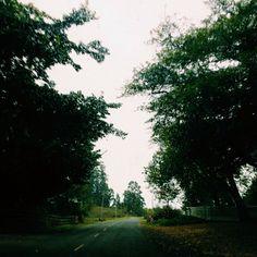 Instagram @gabriellawotherspoon    #winter #rainy #rain #scenic #nature #road #trees #gloomy #vsco #vscocam