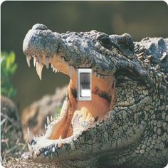 """Rikki KnightTM Alligator in the Wild - Single Toggle Light Switch Cover by Rikki Knight. $13.99. For use on Walls (screws not included). Masonite Hardboard Material. Washable. Glossy Finish. 5""""x 5""""x 0.18"""". The Alligator in the Wild single toggle light switch cover is made of commercial vibrant quality masonite Hardboard that is cut into 5"""" Square with 1'8"""" thick material. The Beautiful Art Photo Reproduction is printed directly into the switch plate and not decoupaged whi..."""