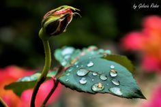 rain drops - Rhodes island