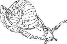 snail art - Google Search