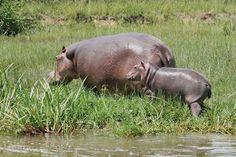 Wildlife Safari, Tourist Information, National Parks, Africa, Cover