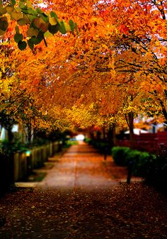 "lifeisverybeautiful: "" Autumn 秋 in Vancouver BC by Edwin_Chan on Flickr. """