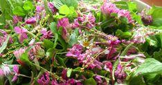 rikkaruohoista lisukesalaatti, blogimiittiin salaatti jossa siankärsämöä, suolaheinää, puna-apilaa, voikukanlehtiä, ahomansikkaa sekä horsmaa