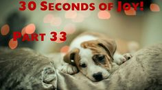 30 Seconds of Joy! Part 33! Dog Watches Mom Write!?