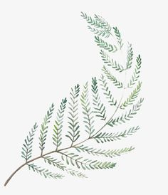 Watercolor Leaf for HerbaLine on Behance Watercolor Leaf, Watercolor Plants, Watercolor Cards, Watercolor Paintings, Plant Illustration, Botanical Illustration, Freetime Activities, Image Deco, Plant Drawing