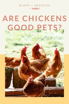 Raising Backyard Chickens, Keeping Chickens, Pet Chickens, Chicken Humor, Chicken Feed, Chicken Story, Chicken Pictures, Farm Animals, Animal Rescue