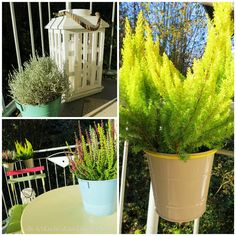 Fabulous Winterbepflanzung Balkon Winter plants on the balcony winter autumn garden gardenlovers