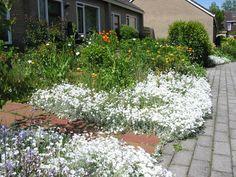 spontaan tuintje in volle bloei